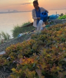 A woman waters her riverbank garden on the Mekong River.