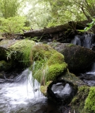 Tres Arroyo, a small stream in Chile.