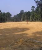 Deforestation in Ivindo National Park