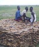Fishermen and their dried catch, Lake Turkana