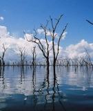 Dead trees in Balbina Reservoir, Brazil