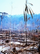 Deforestation and Burning in the western Brazilian Amazon