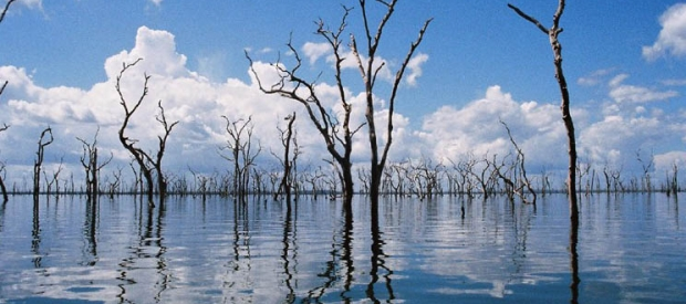 Dead trees in Balbina Reservoir, Brazil