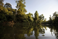 Remote River Home to the Siamese Crocodile